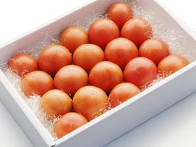 小の よさこい高知県産 フルーツトマト1kg(箱)