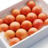 小の よさこい高知県産 フルーツトマト1kg(箱)|高知特産 高糖度フルーツトマト