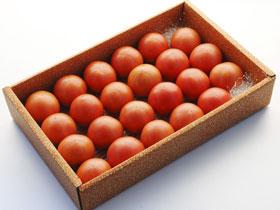 小の よさこい高知県産 フルーツトマト1.5kg(箱)