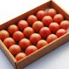 小の よさこい高知県産 フルーツトマト1.5kg(箱)|高知特産 高糖度フルーツトマト