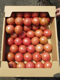小の よさこい高知県産 フルーツトマト4kg(箱)